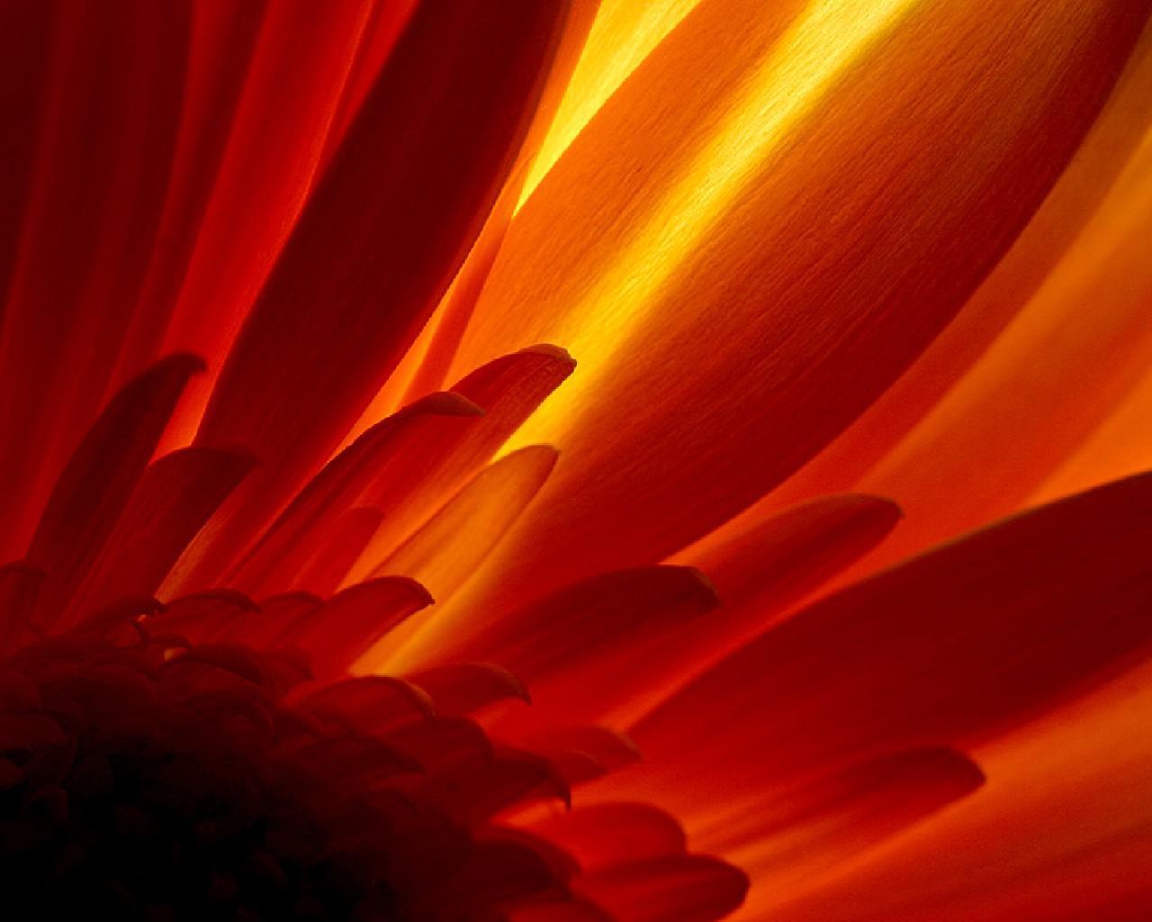 HD Wallpapers Glowing Flower