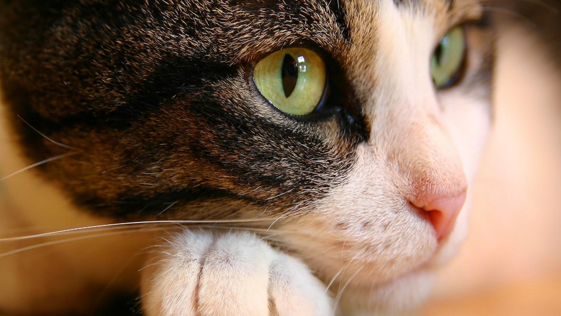 HD Wallpapers Cat Eyes