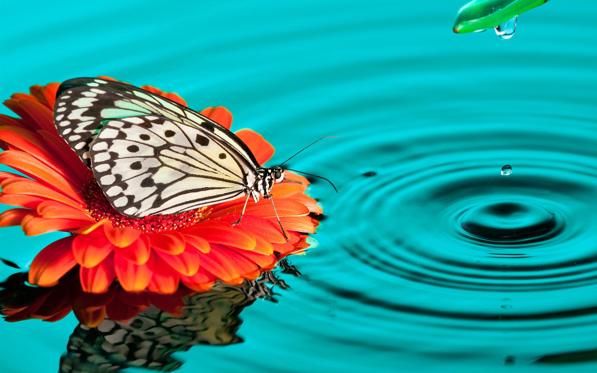 HD Wallpapers Butterfly Drops