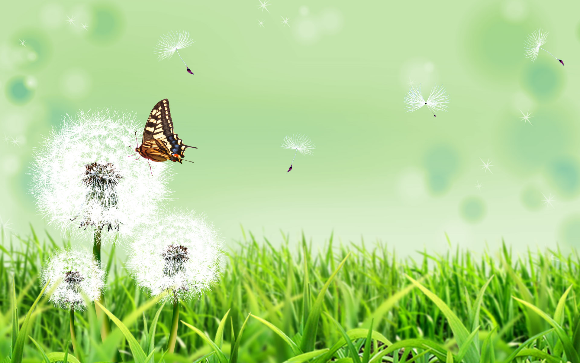 HD Wallpapers Butterfly Nature