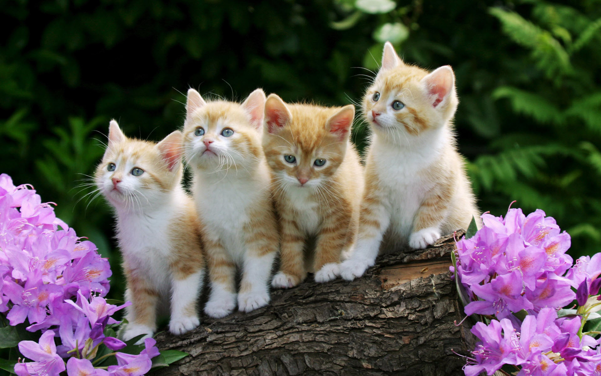 HD Wallpapers Curious Kittens