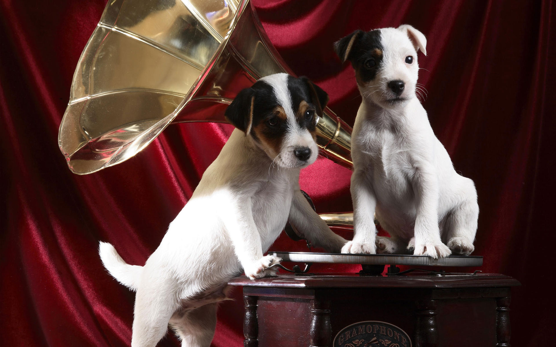 HD Wallpapers Gramophone Pups