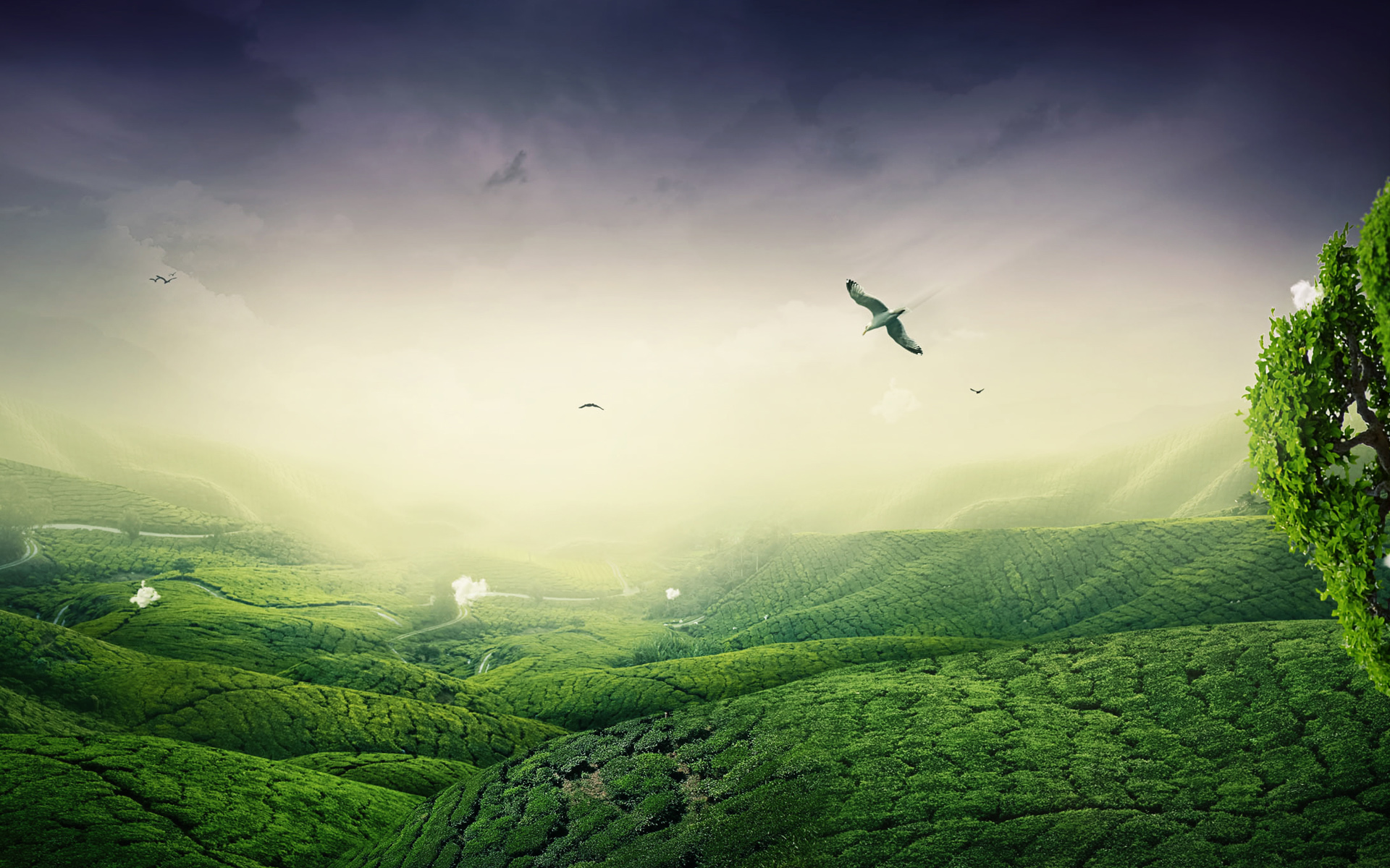 HD Wallpapers Green Lscape