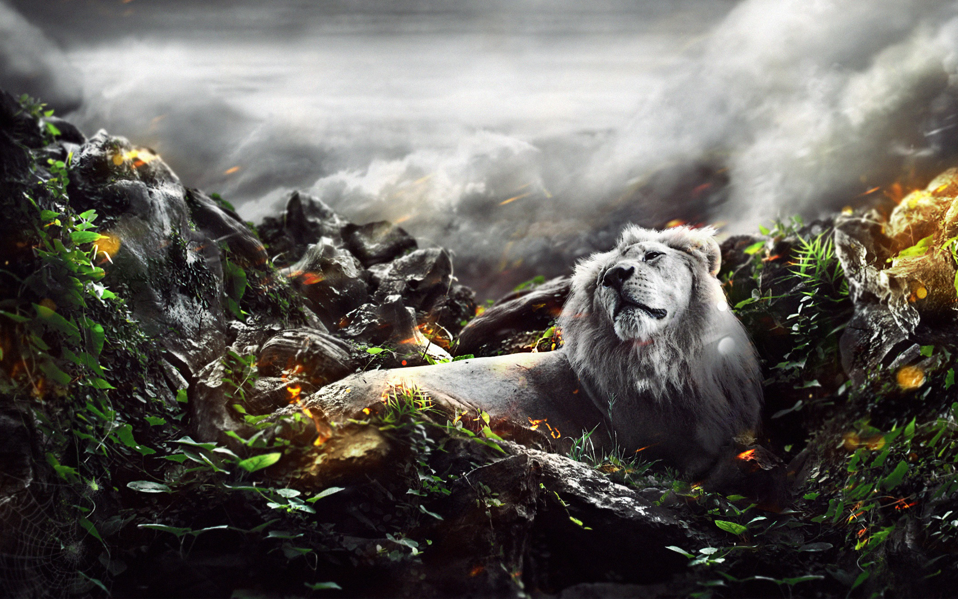 HD Wallpapers Jungle Lion