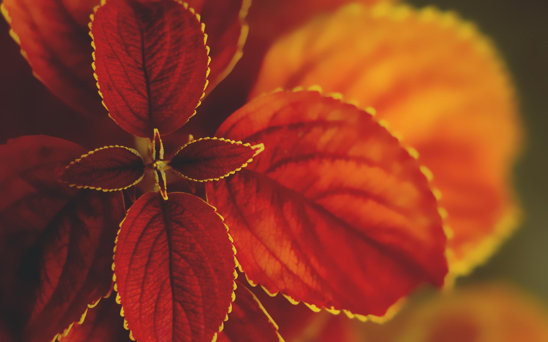 HD Wallpapers Macro Nature