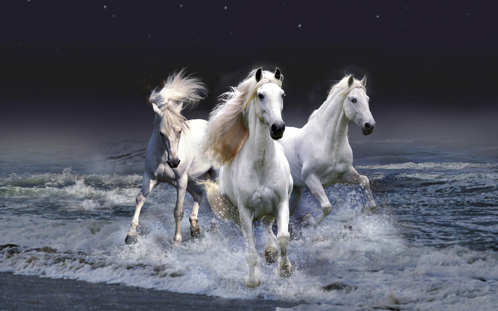 HD Wallpapers Mystic Horses
