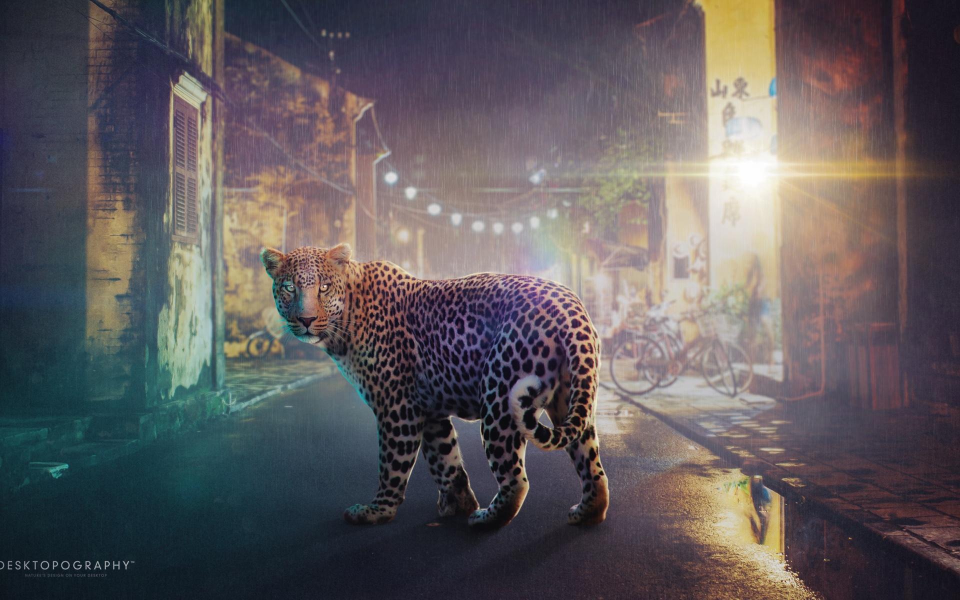 HD Wallpapers Night Leopard