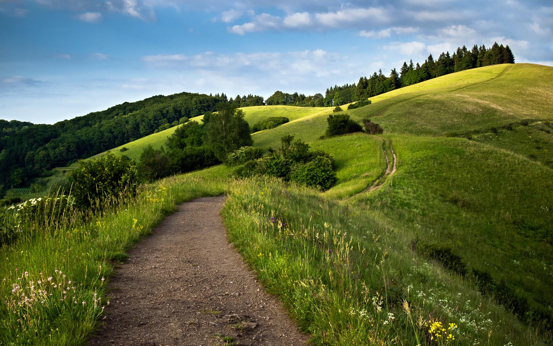 HD Wallpapers Path Green Fields