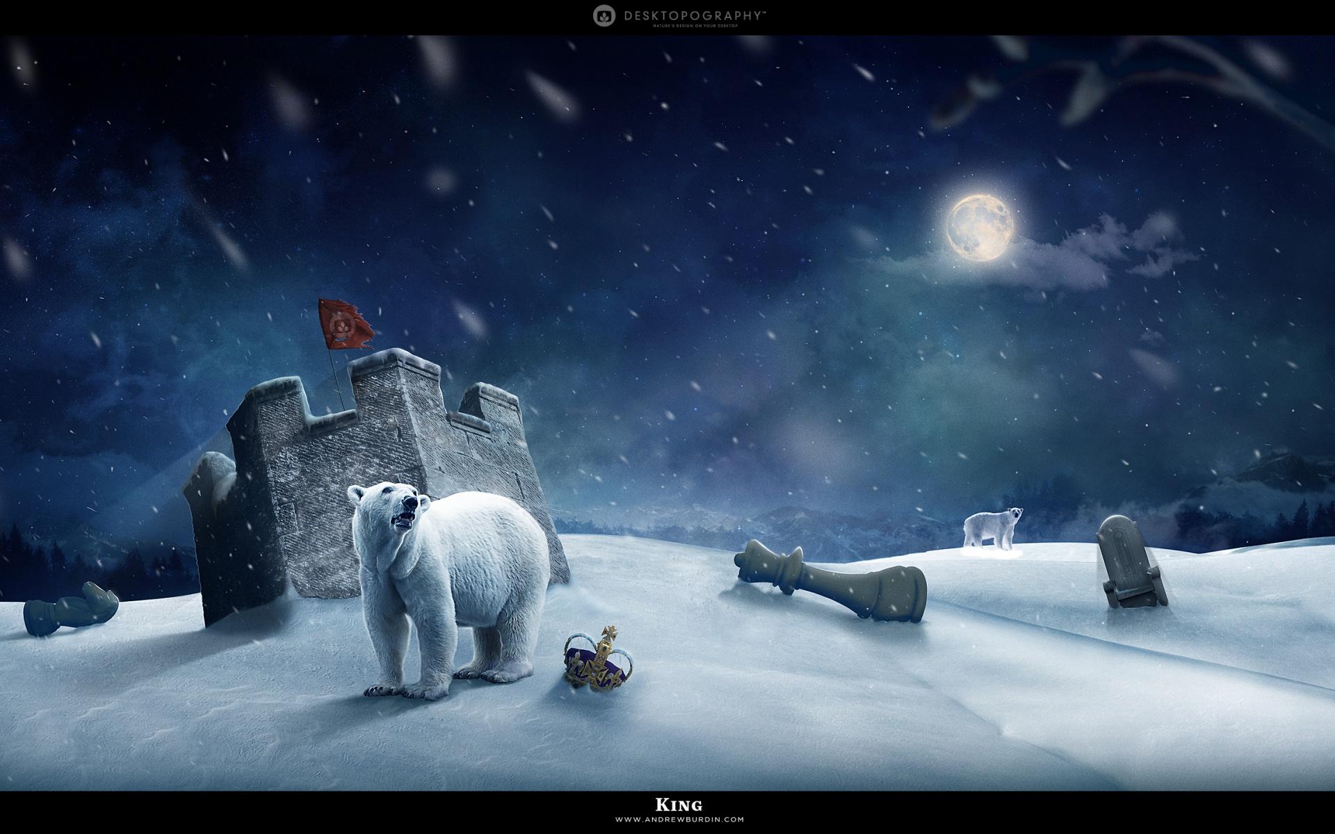 HD Wallpapers Polar King