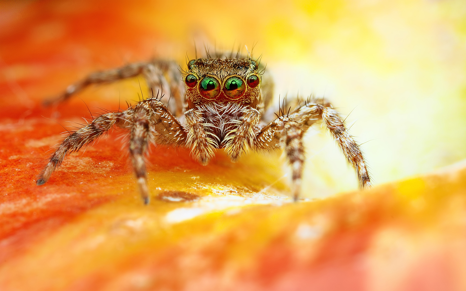 HD Wallpapers Scary Spider
