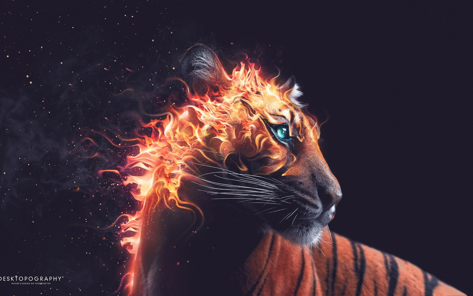 HD Wallpapers Tiger Fire