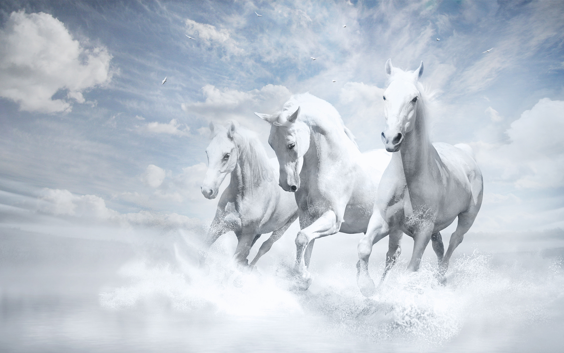 HD Wallpapers White Horses