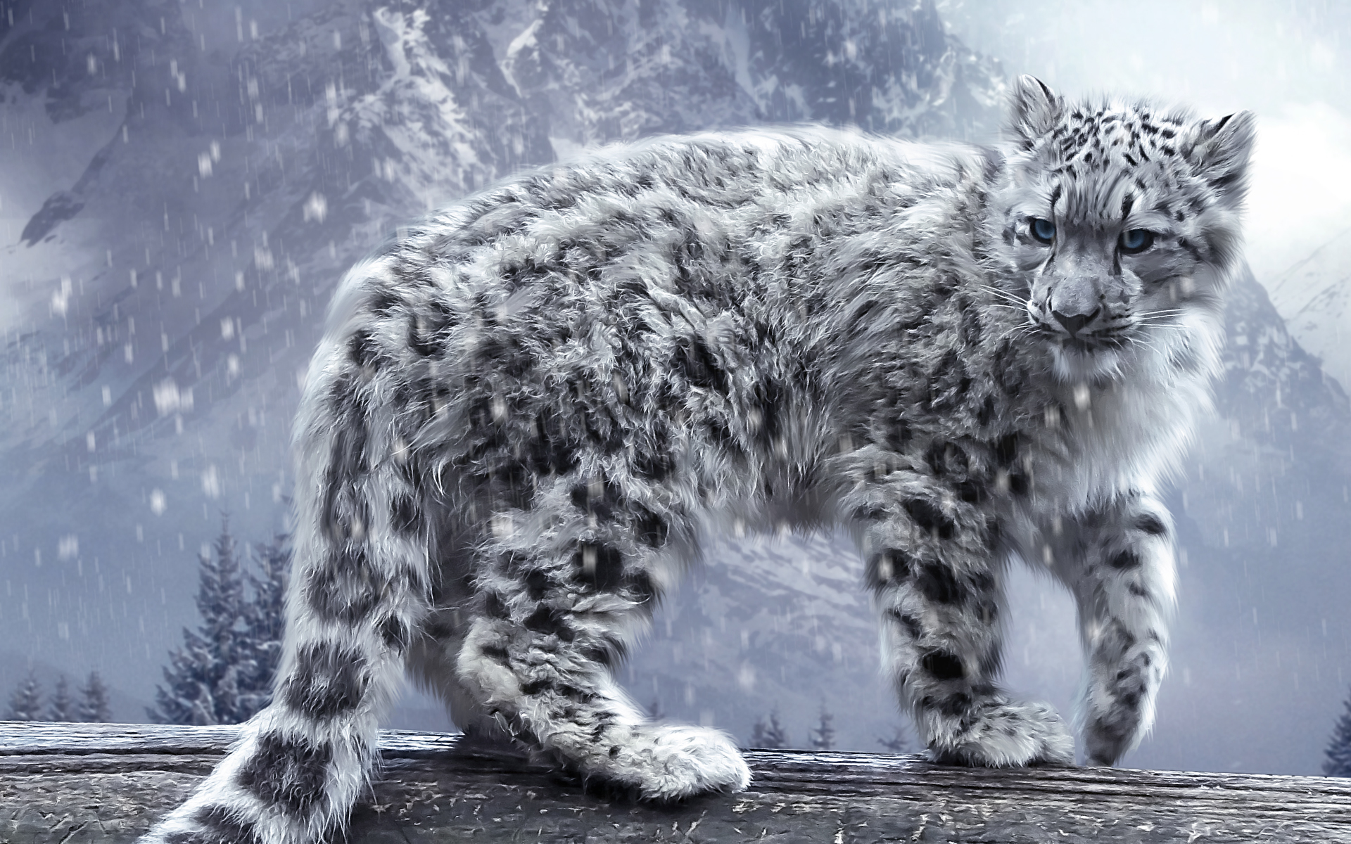HD Wallpapers White Leopard