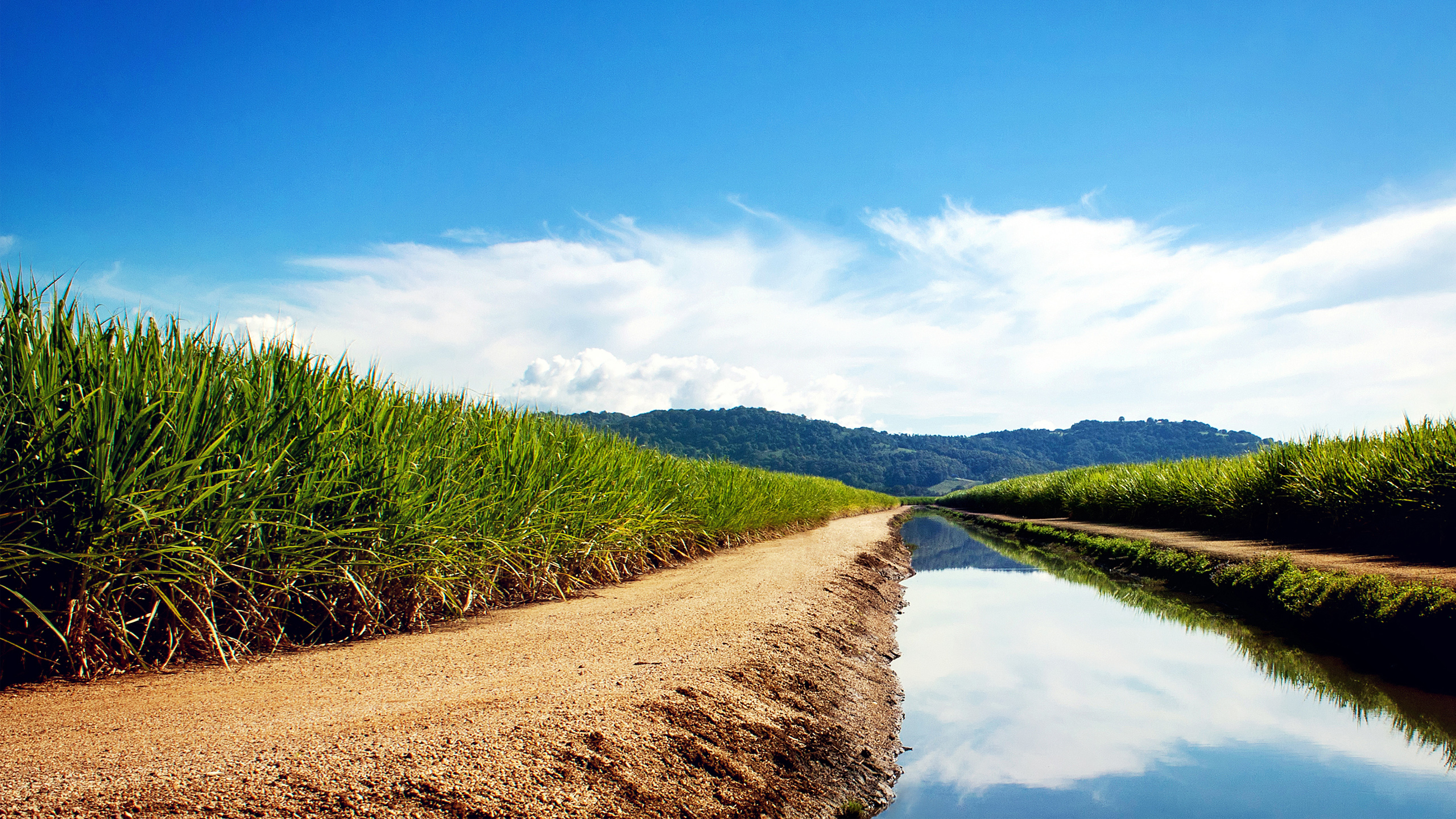 HD Wallpapers Sugarcane Fields