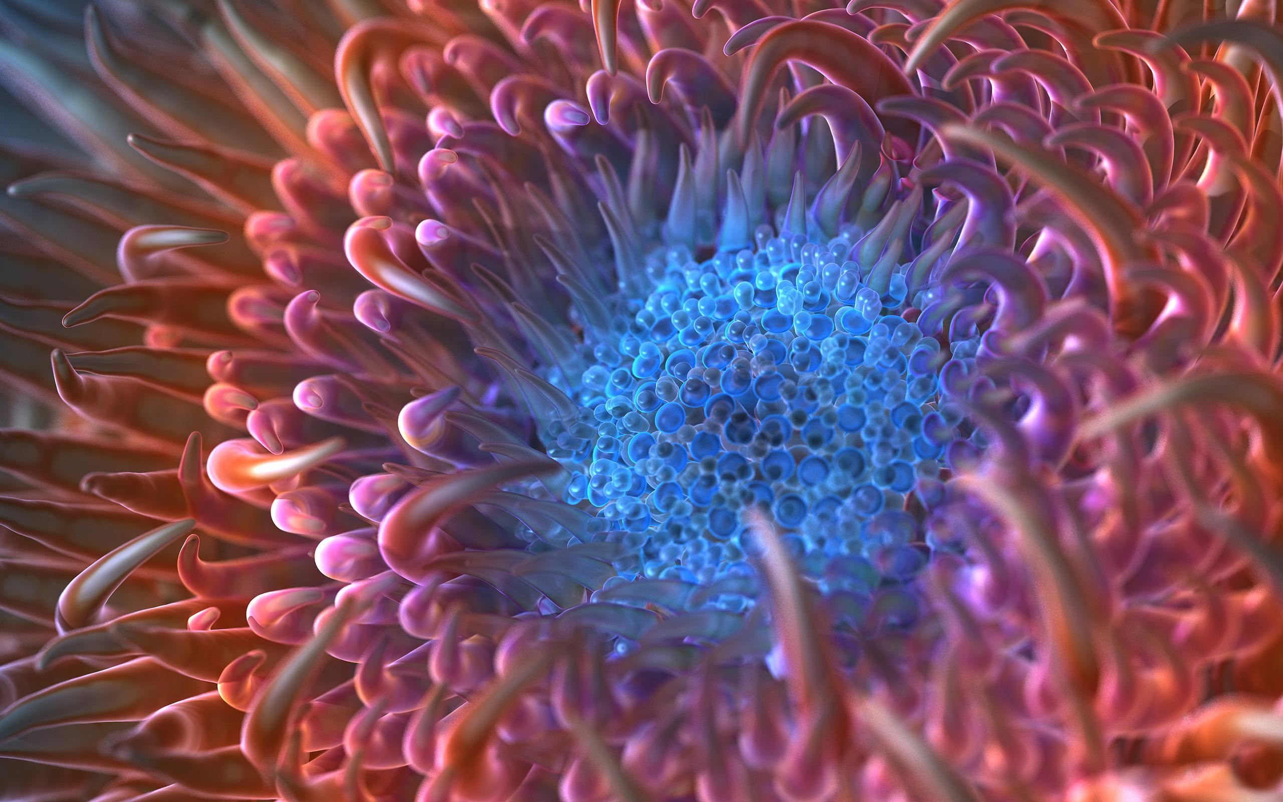 HD Wallpapers Digital Anemone Flower