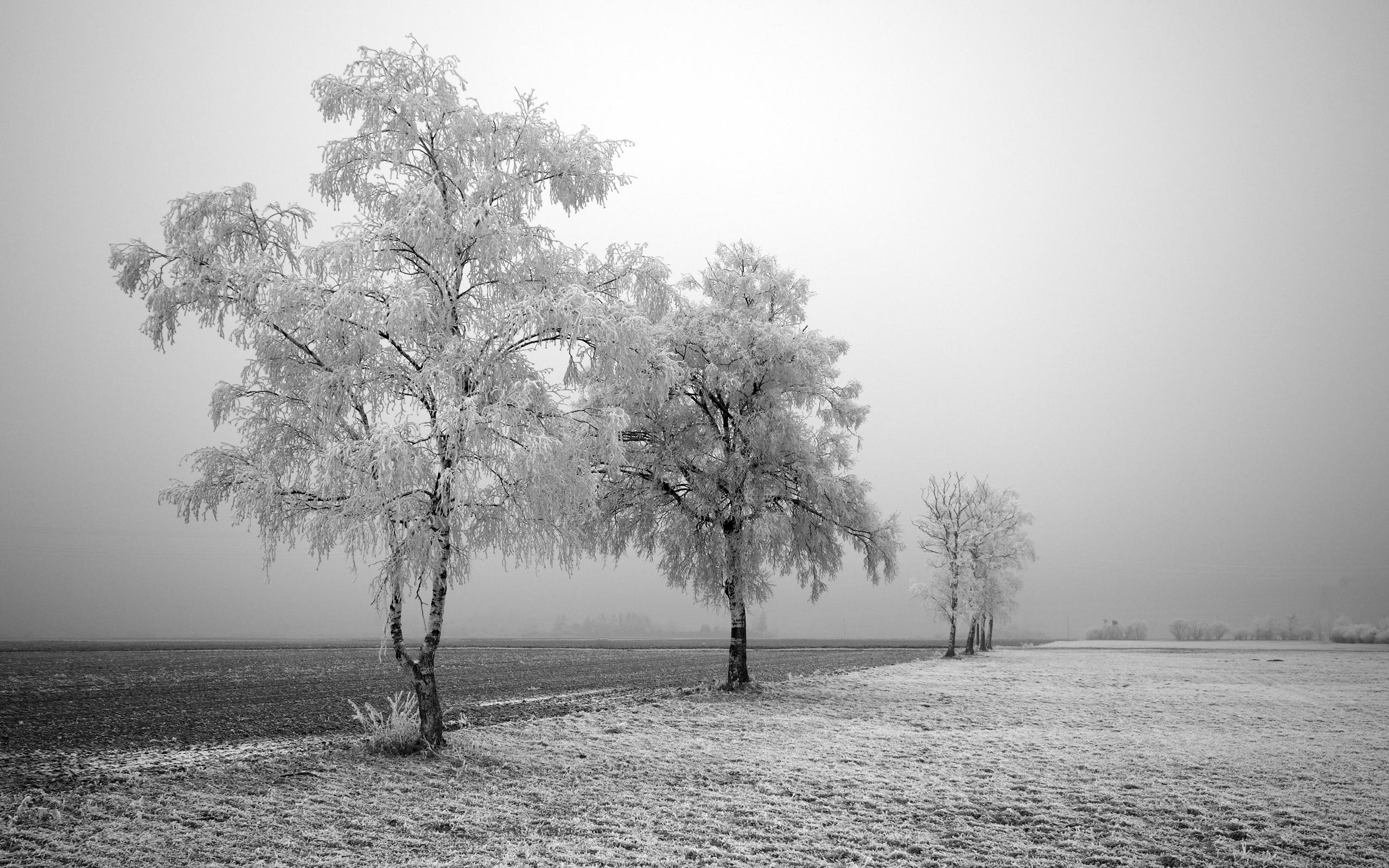 HD Wallpapers Frozen Trees