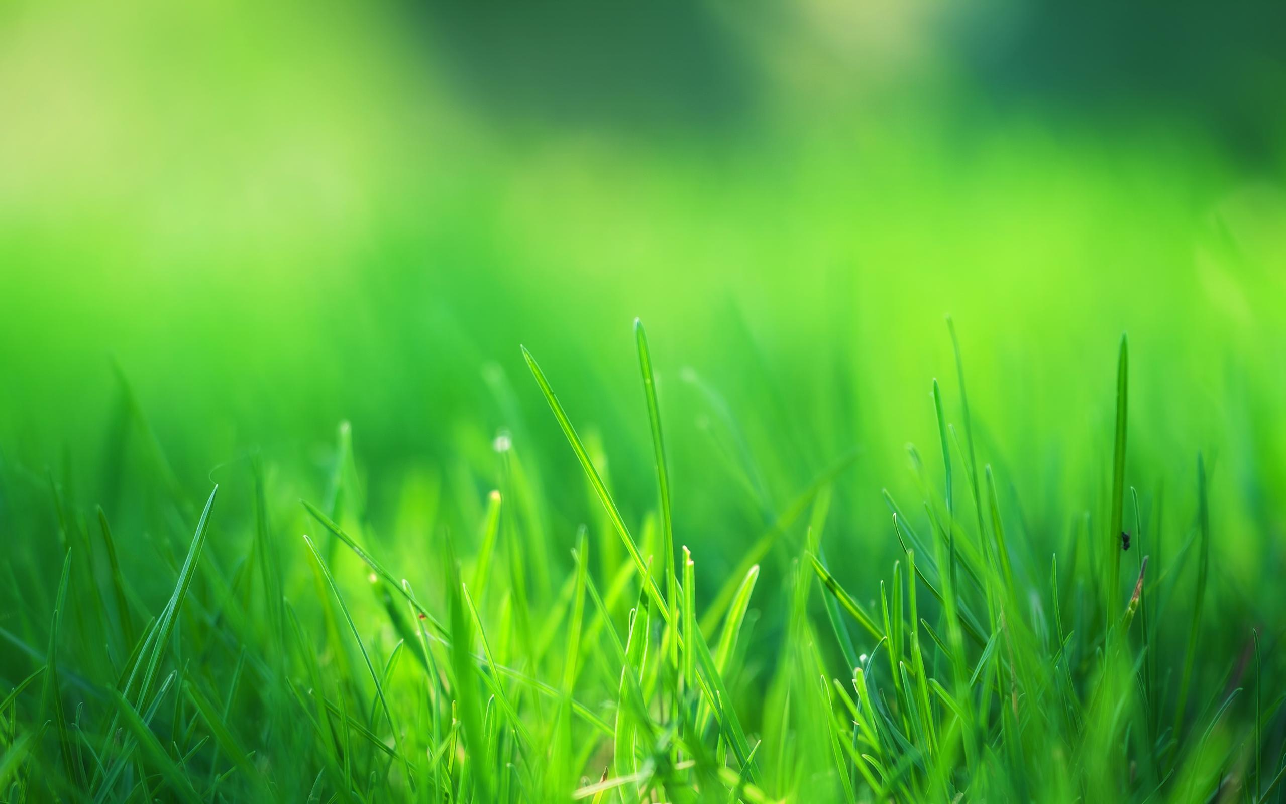HD Wallpapers Green Grass Field