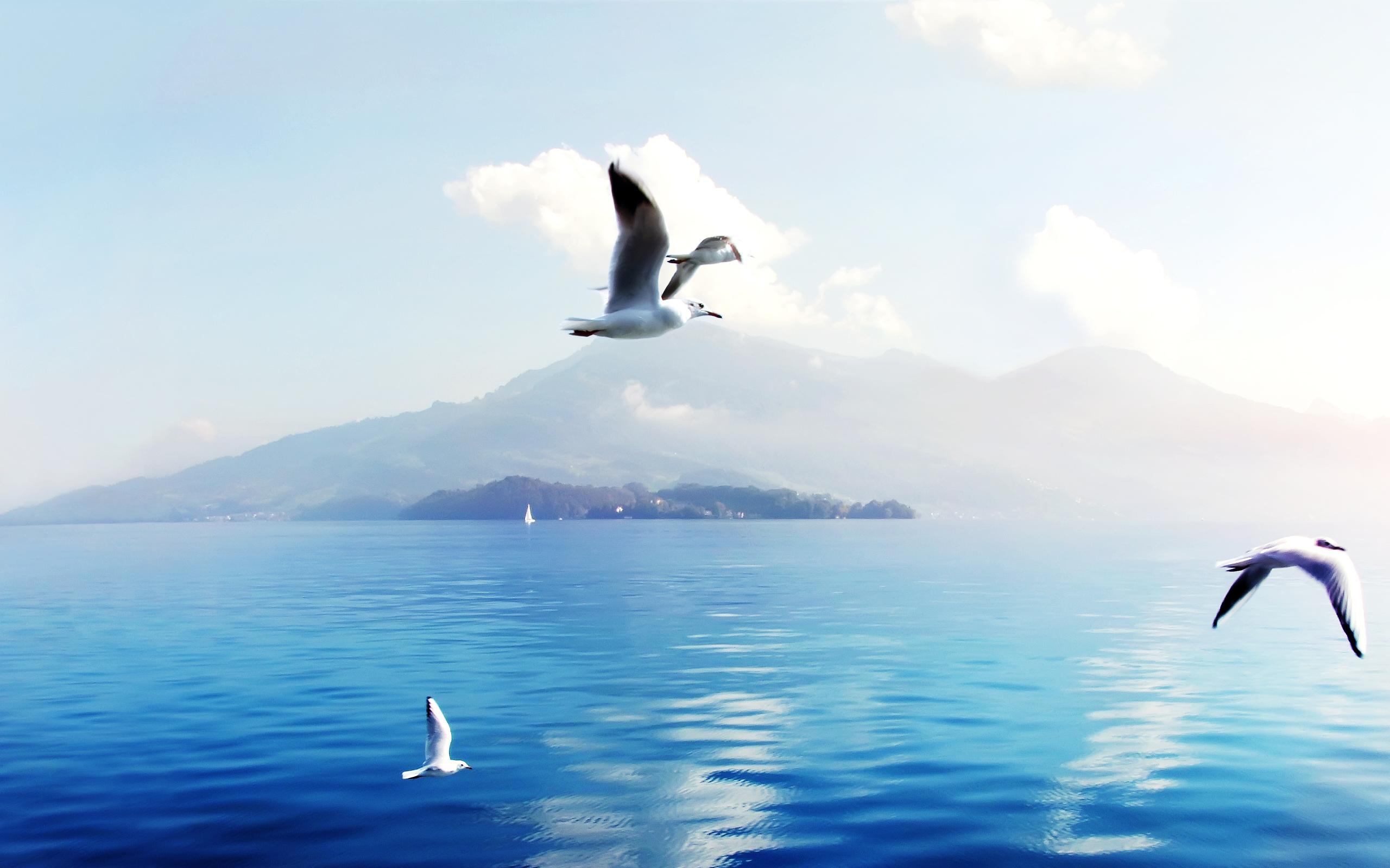HD Wallpapers Seagulls in Switzerl