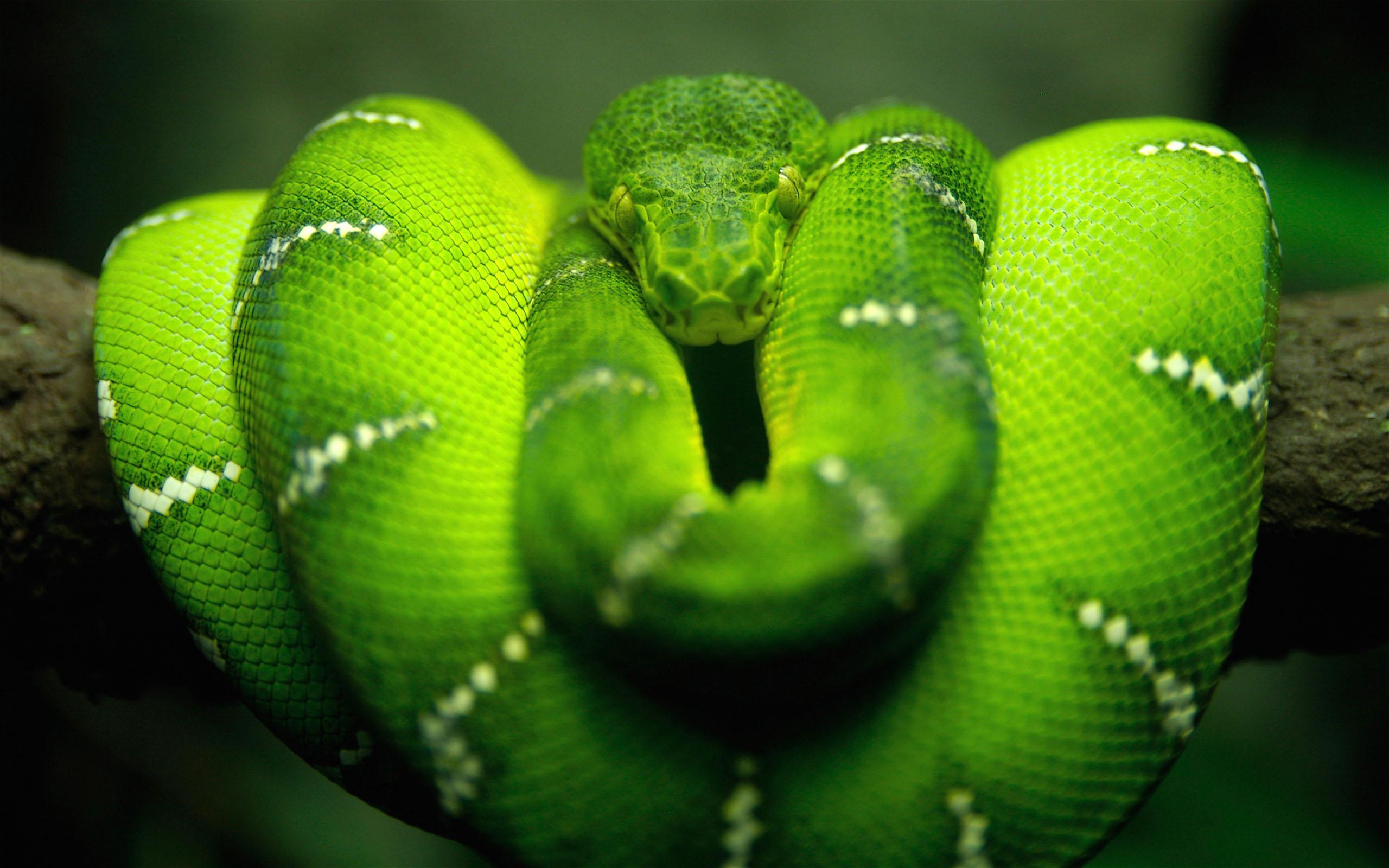 HD Wallpapers Tree Snake HD