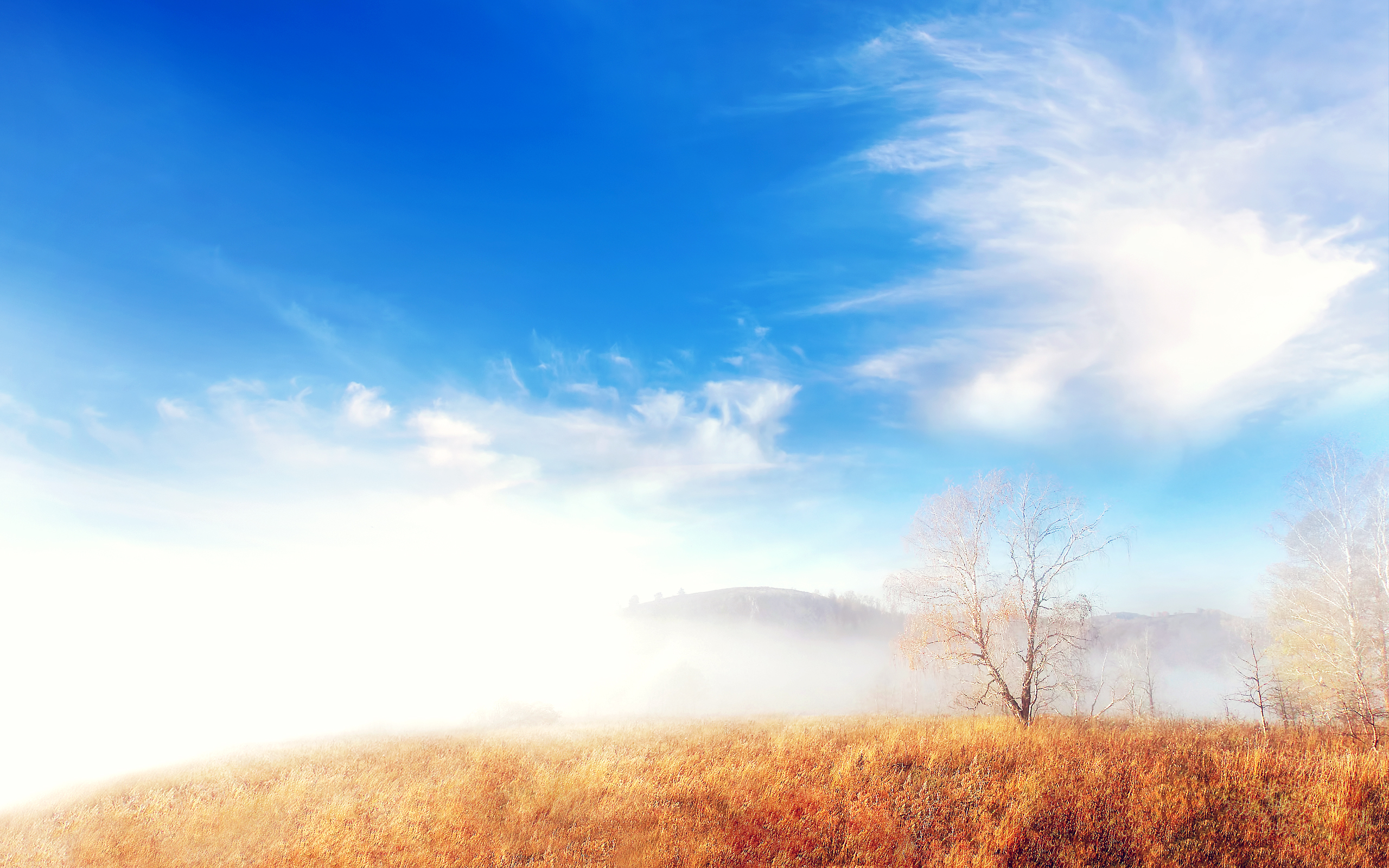 HD Wallpapers Trees Cloud Fog Lscape