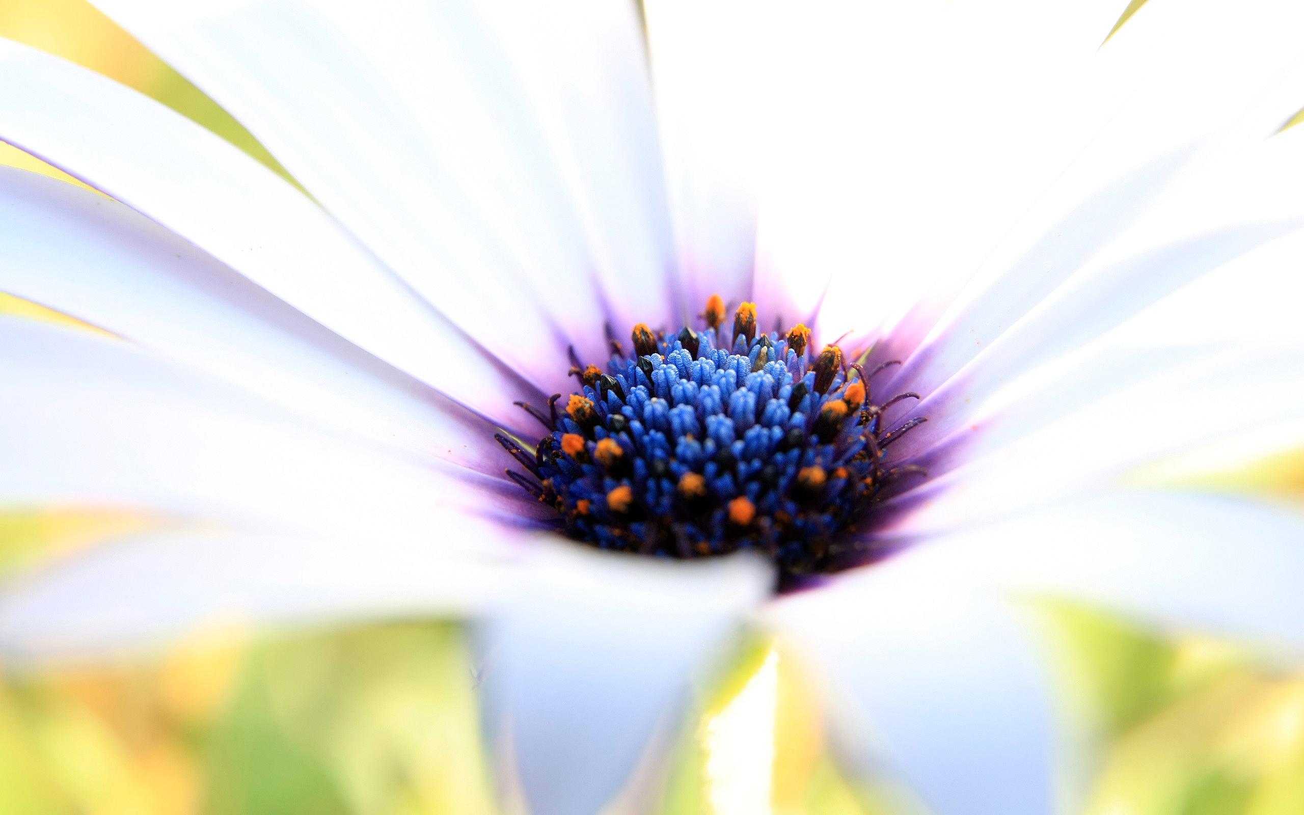 HD Wallpapers White Purple Flower