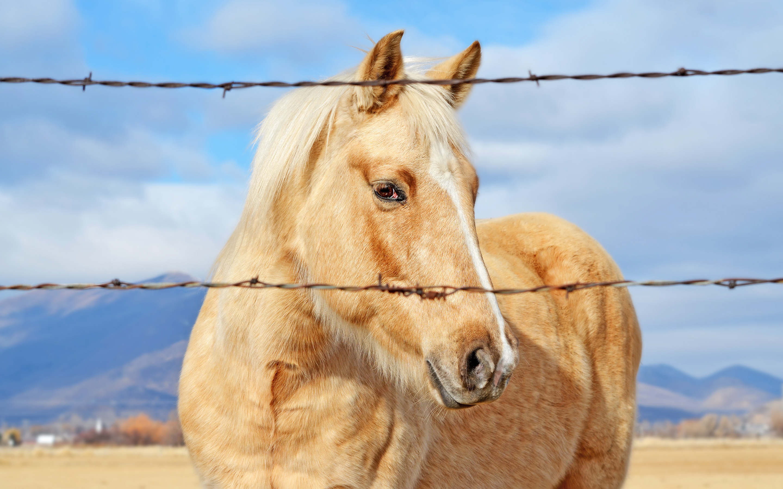 HD Wallpapers Best Horse