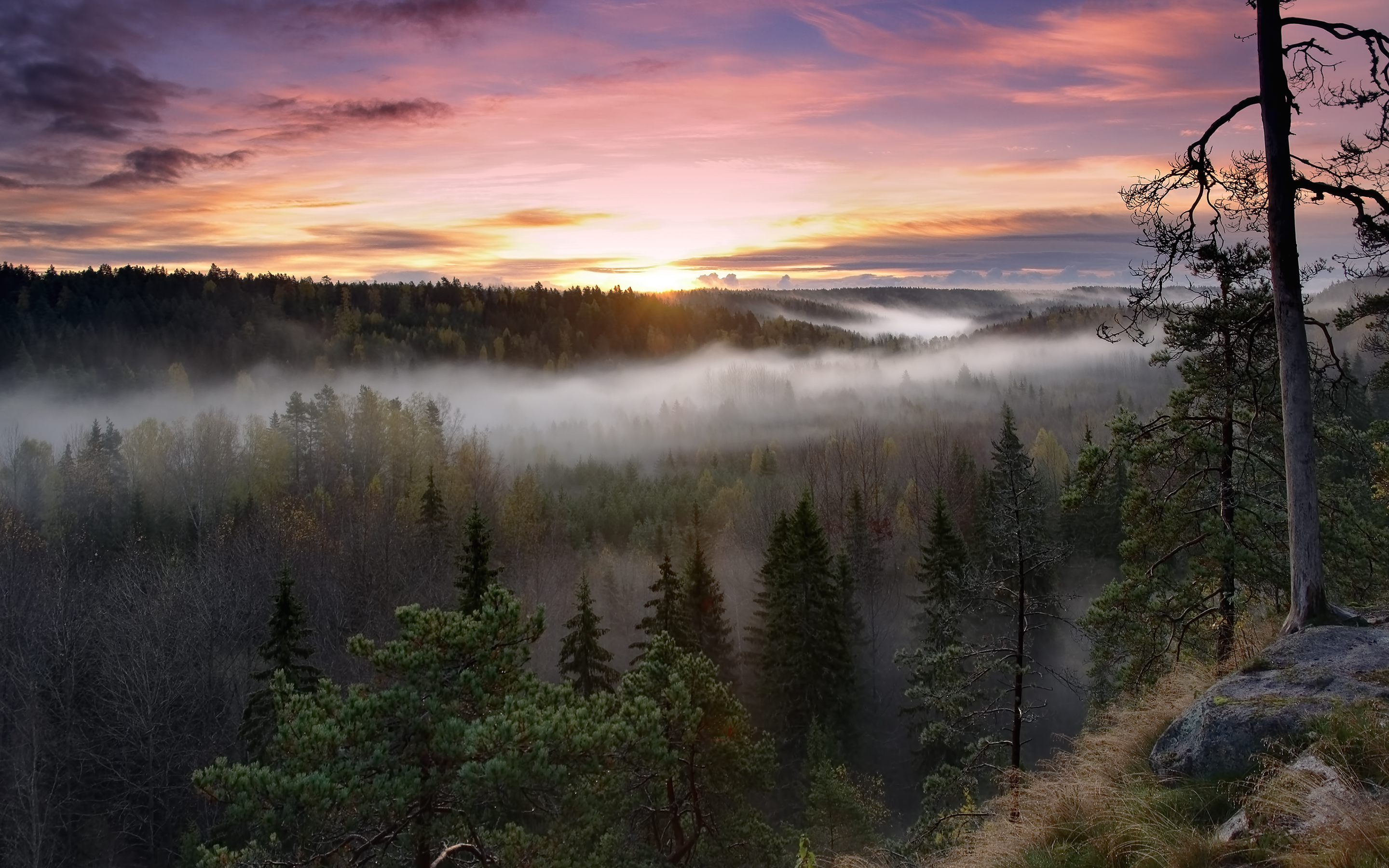 HD Wallpapers Foggy Sunrise National Park