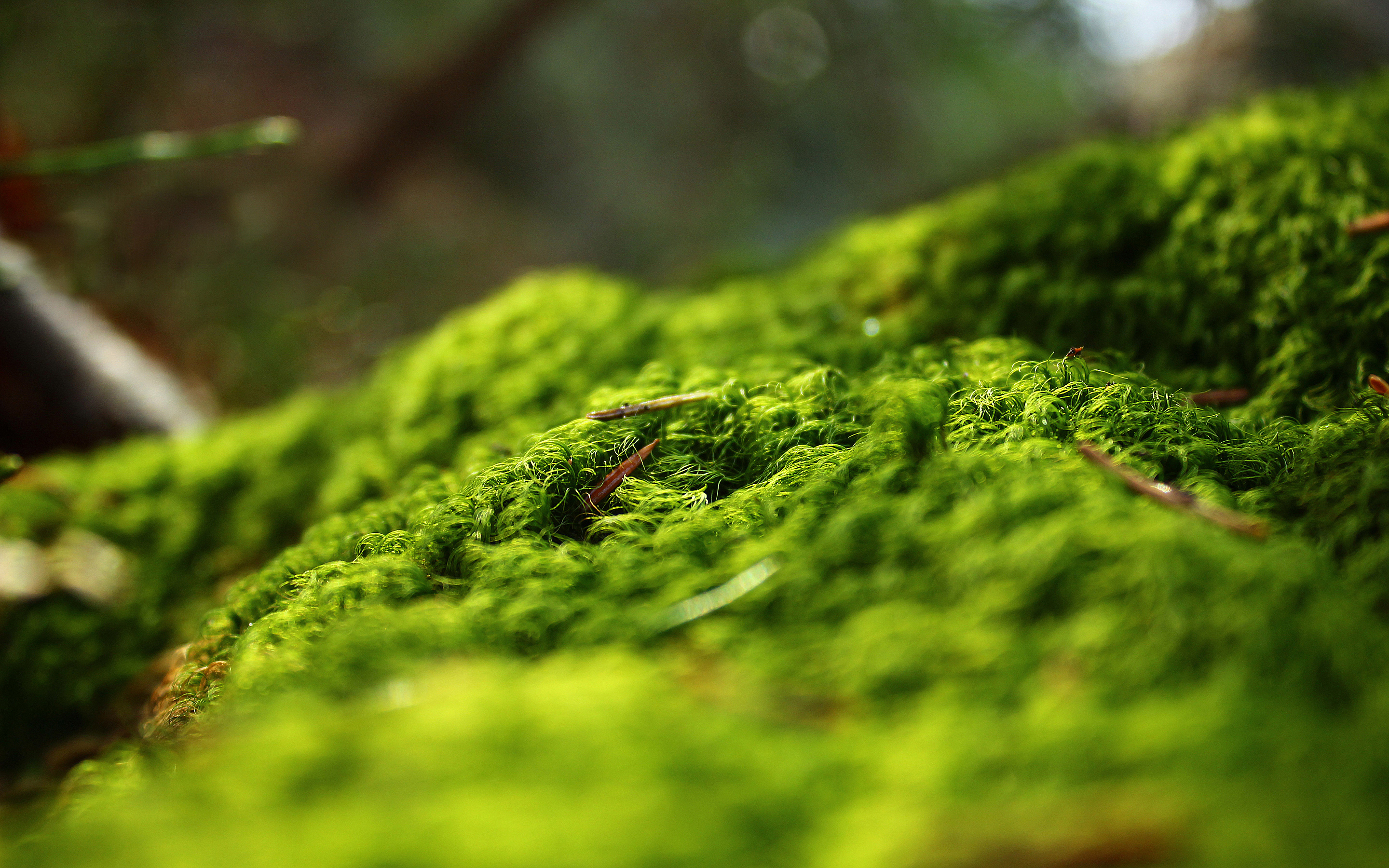 HD Wallpapers Forest Springtime