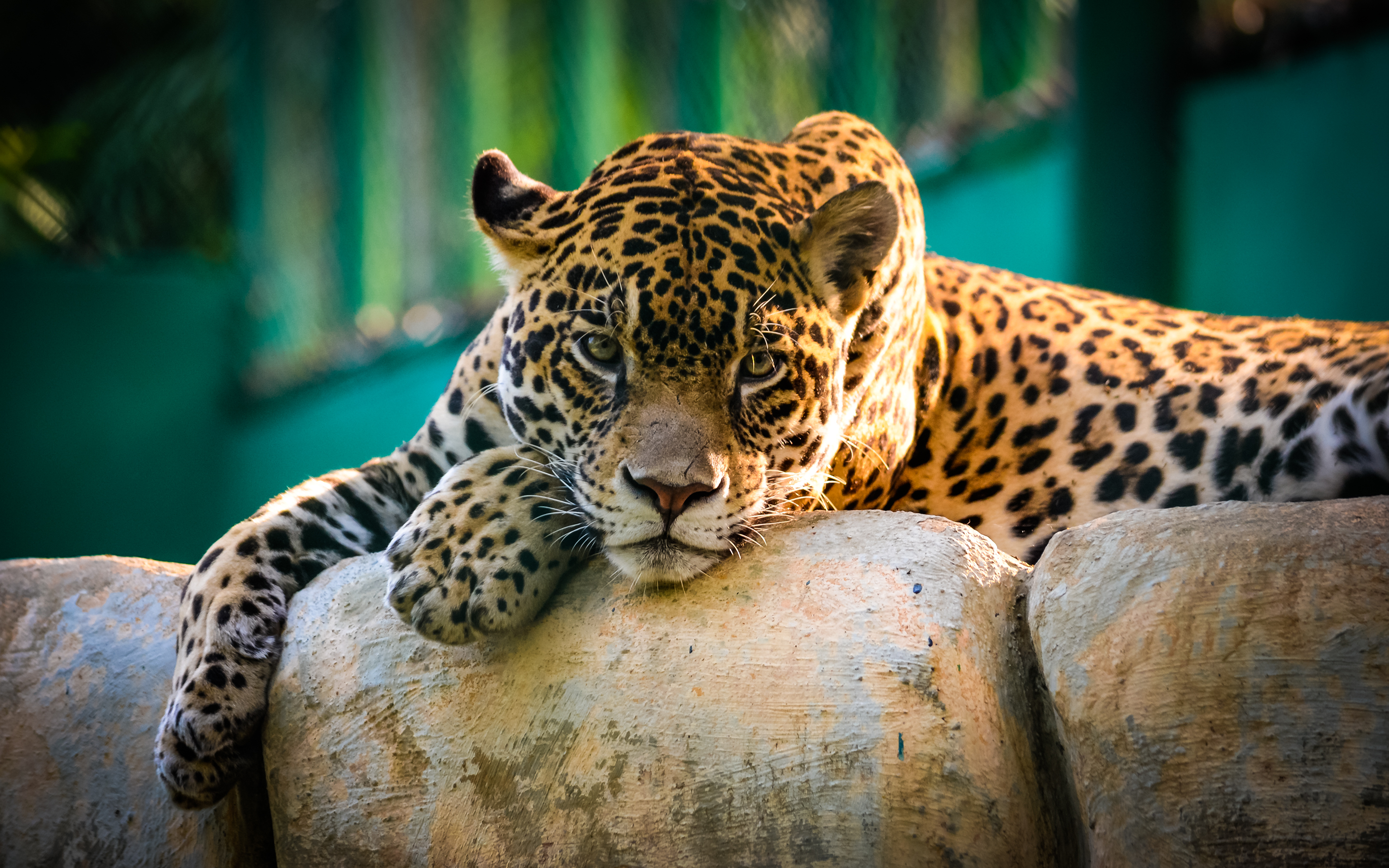 HD Wallpapers Jaguar Mexico