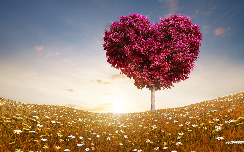 HD Wallpapers Love Heart Tree Fields