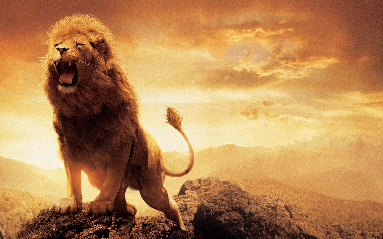HD Wallpapers Narnia Lion Aslan